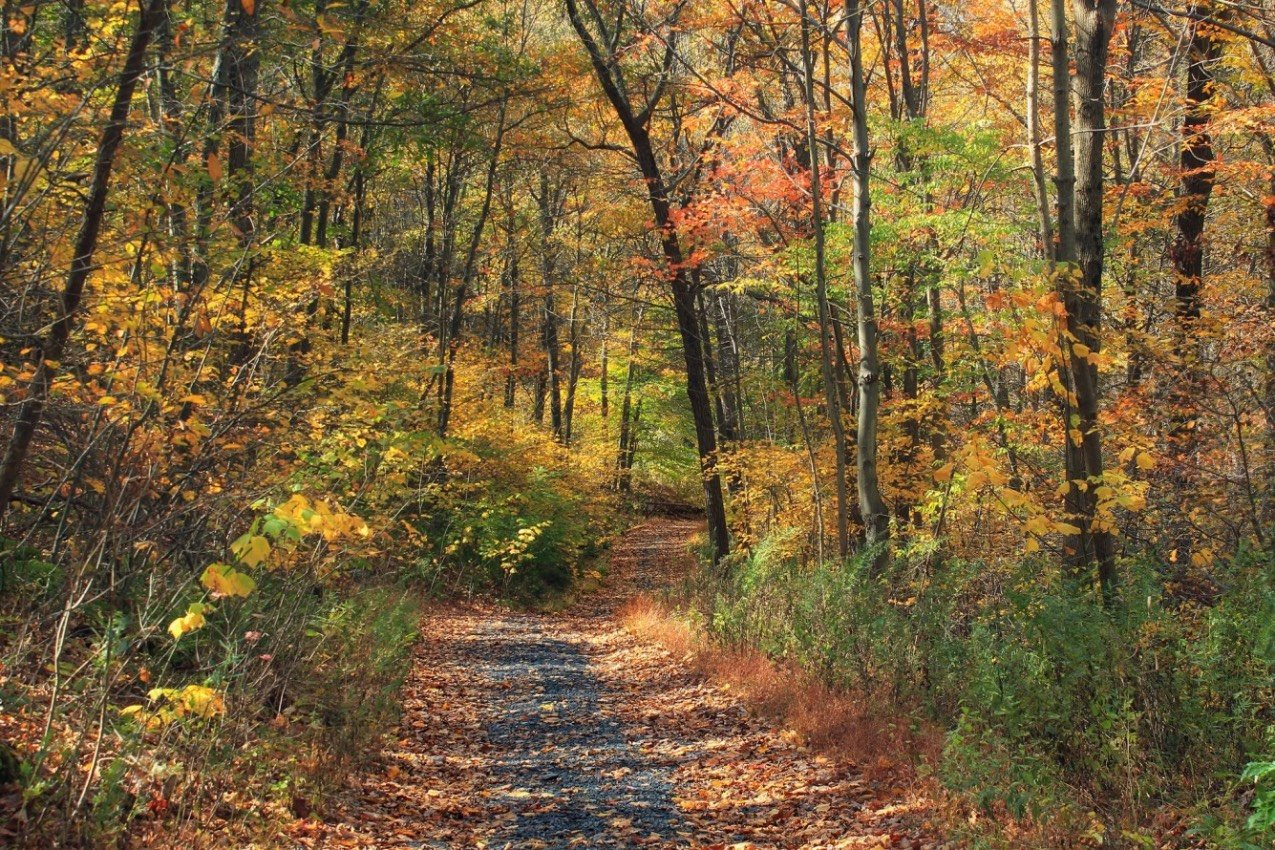 6 Great Tips for Successfully Thru-Hiking the Appalachian Trail