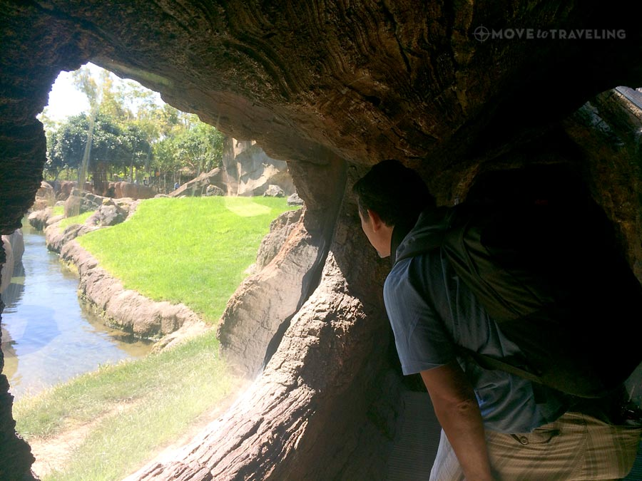 Valencia_Bioparc_TreeTunnel2_EquatorialForestHabitat